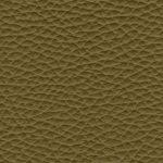 NAP.7612 kiwi