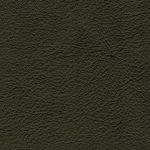 ELD.7389 olivo